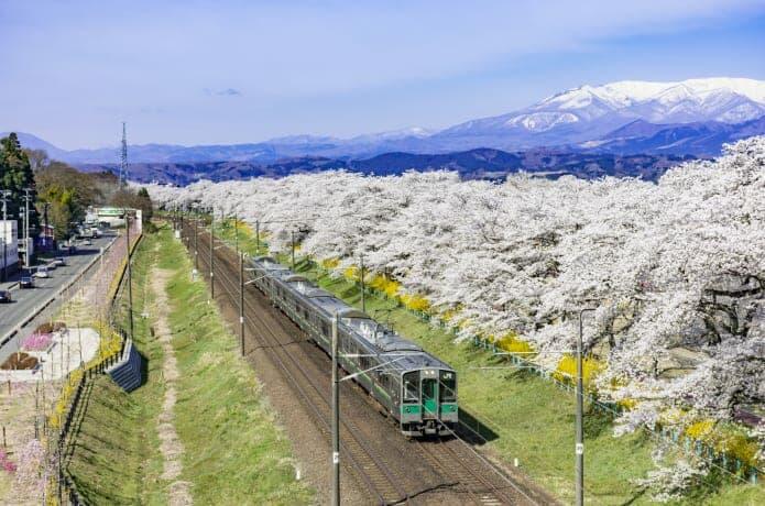 蔵王連峰と桜