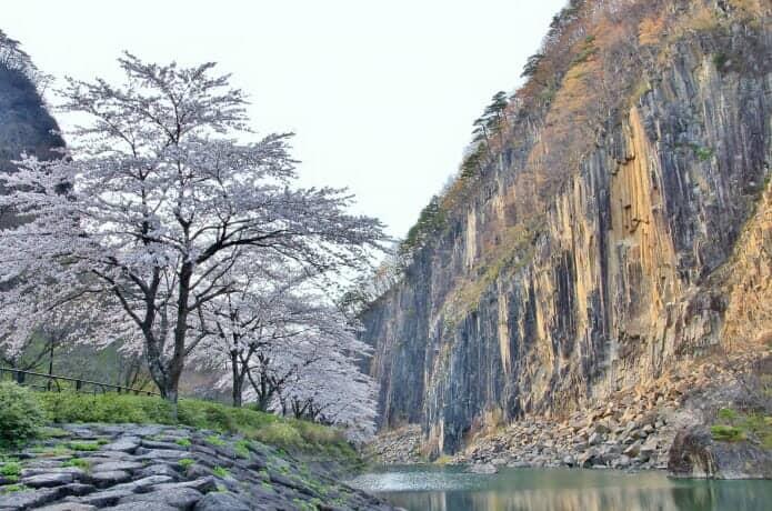 材木岩の桜