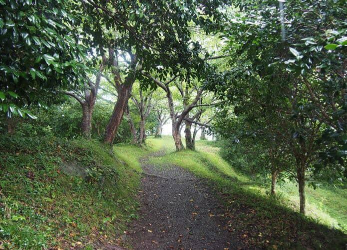 稲ヶ﨑公園と林道