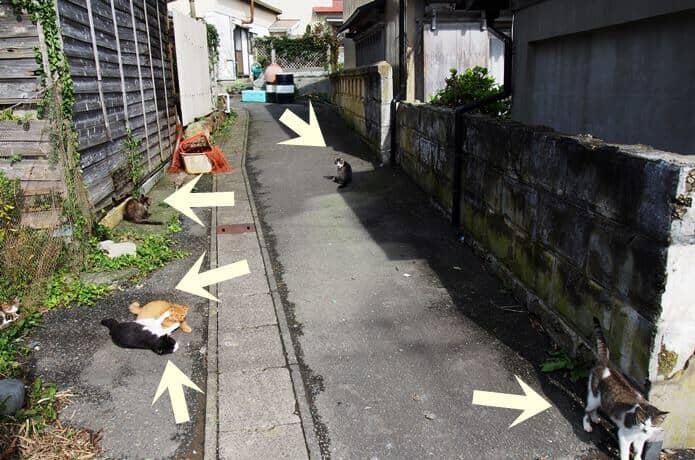 田代島の路地裏にたまる猫