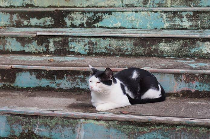 阿部ツ商店前で日向ぼっこしている猫