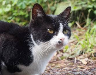 田代島 利凛々しい顔つきの猫