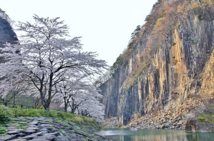 材木岩と桜
