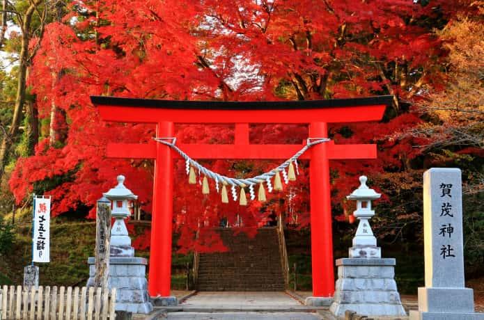 賀茂神社 宮城 紅葉