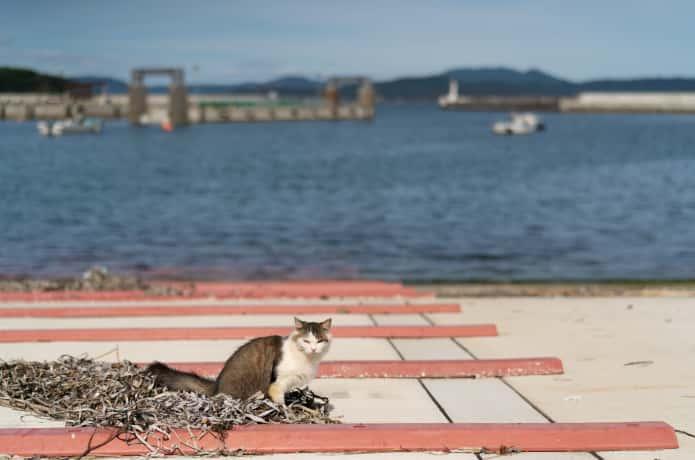 田代島の港と猫