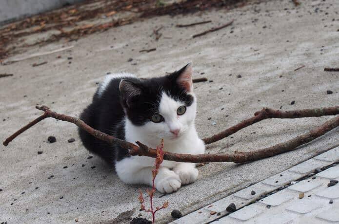 田代島 座っている猫