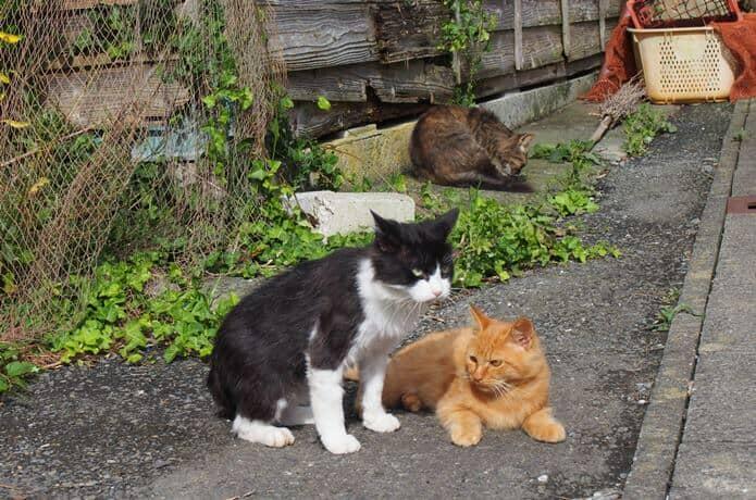 田代島 寄り添う2匹の猫