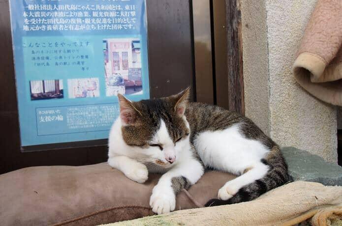 田代島 島の駅にいた猫