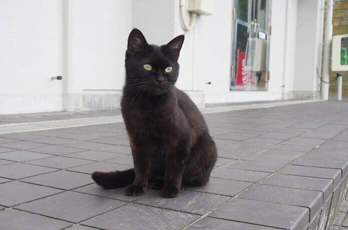 田代島 黒猫
