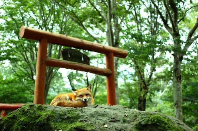 蔵王キツネ村の稲荷神社