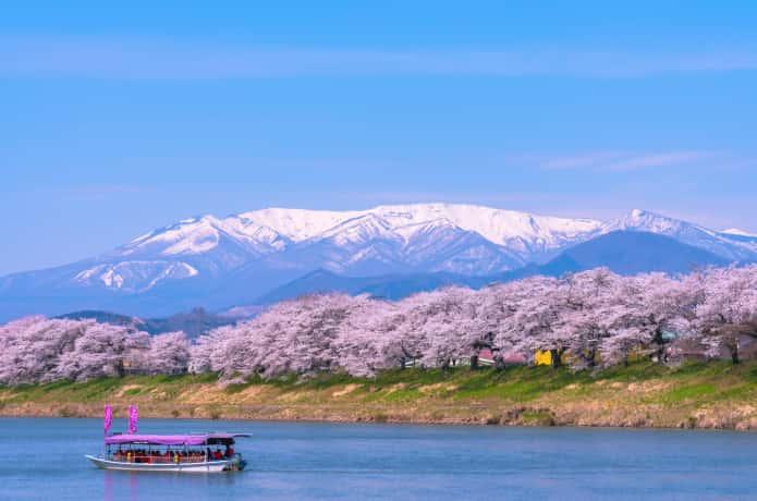 白石川堤一目千本桜と屋形船
