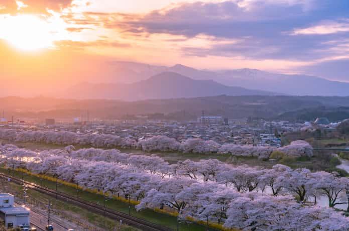 白石川一目千本桜と夕焼け