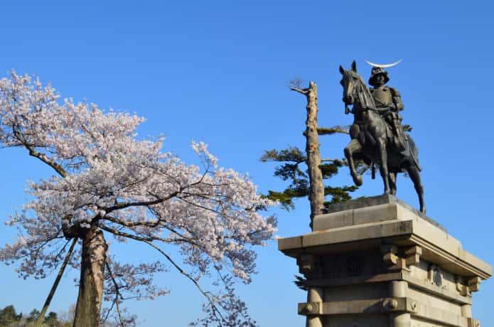仙台城跡の桜