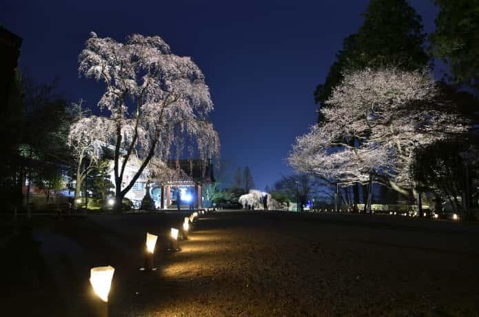鹽竈神社 ライトアップ