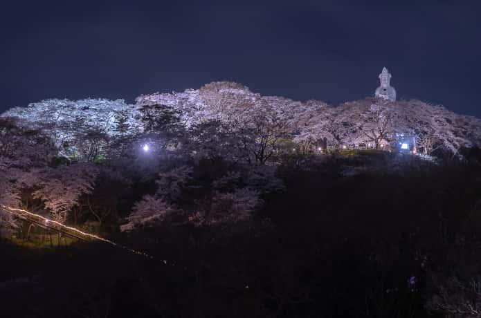 地上から見上げた船岡城址公園