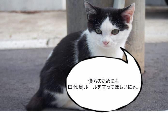 田代島の白黒猫