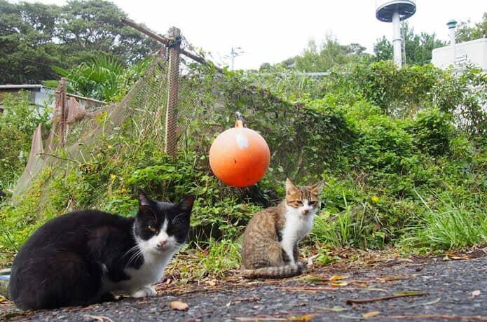 田代島 民家の玄関にいた猫