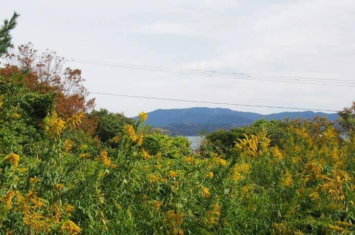 田代島 山の上からの景色