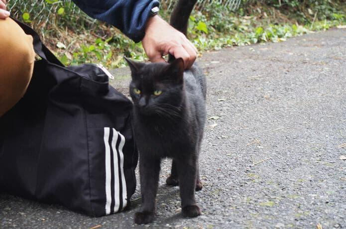 観光客にすり寄る田代島の猫