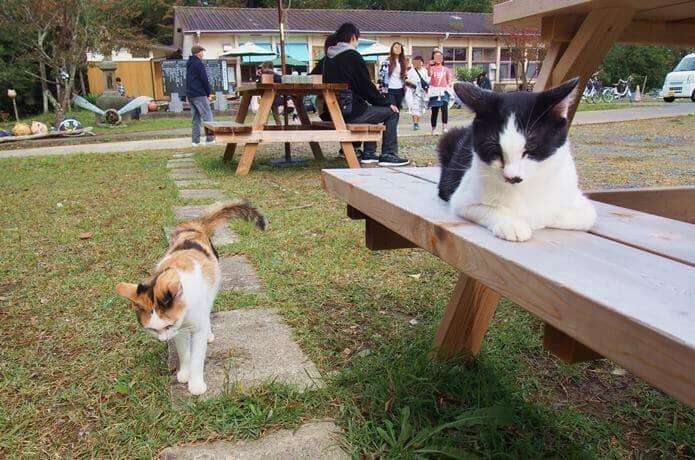 田代島 島の駅とベンチにいる猫