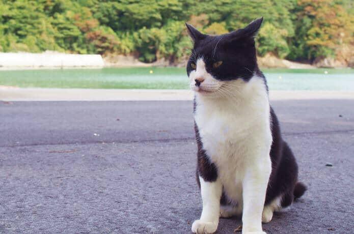 田代島 猫島