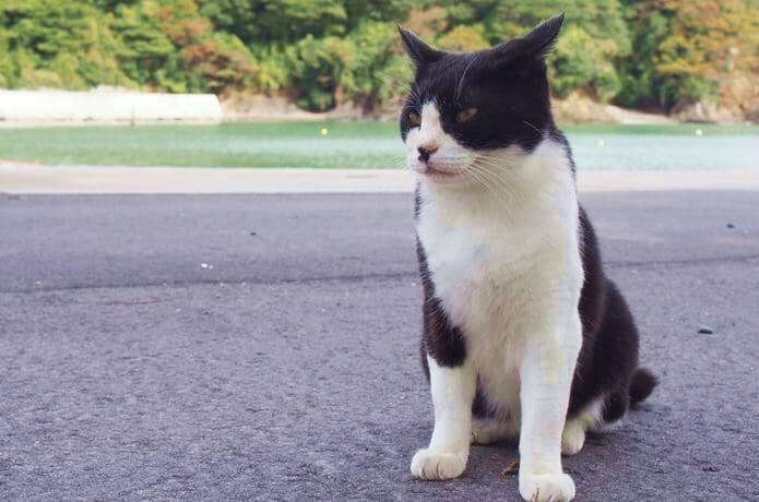 大泊港 黒白猫