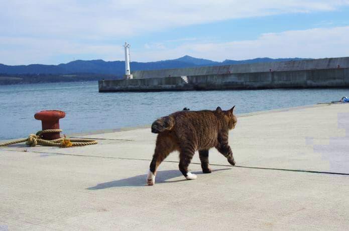 大泊港を歩く猫