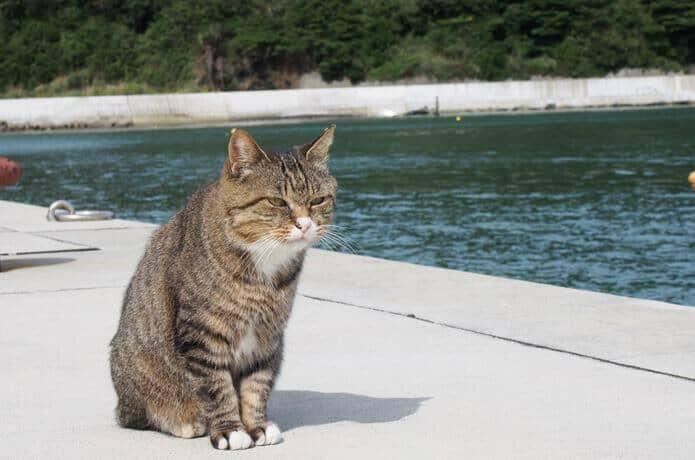 田代島 大泊港の猫
