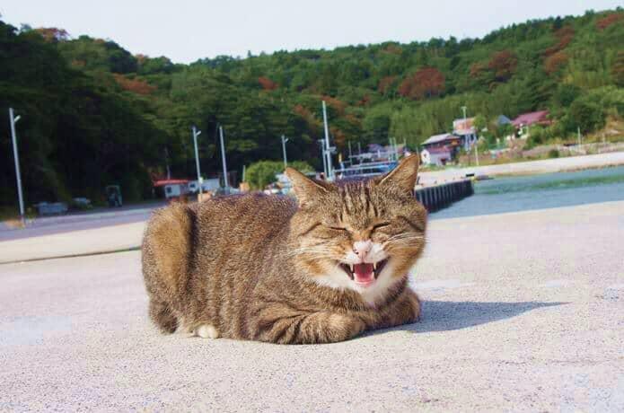 大泊港 威嚇する猫