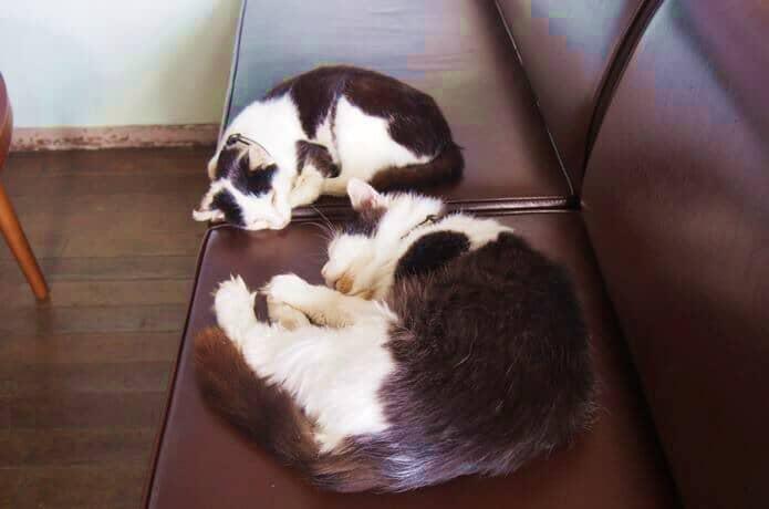 クロネコ堂でお昼寝中の猫