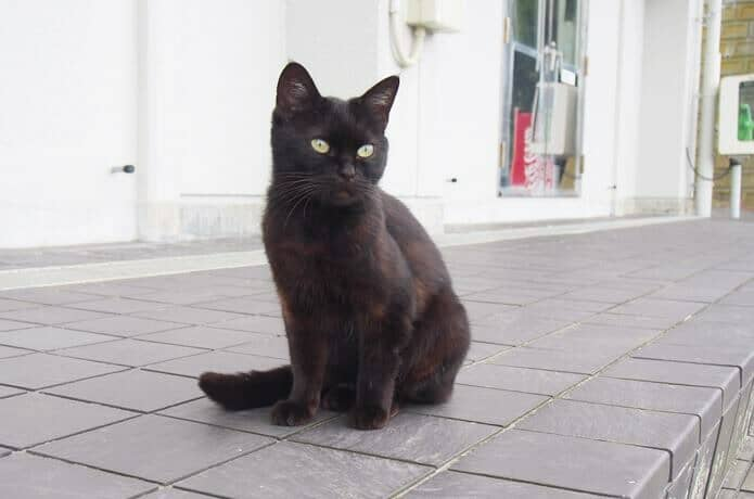 仁斗田港にいた黒猫