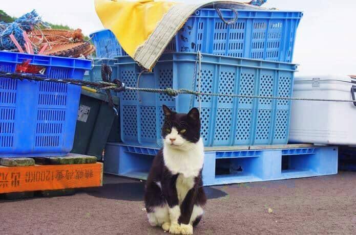 田代島 漁港 猫