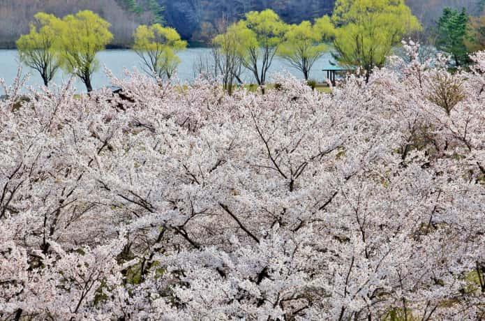 七ヶ宿ダム自然休養公園