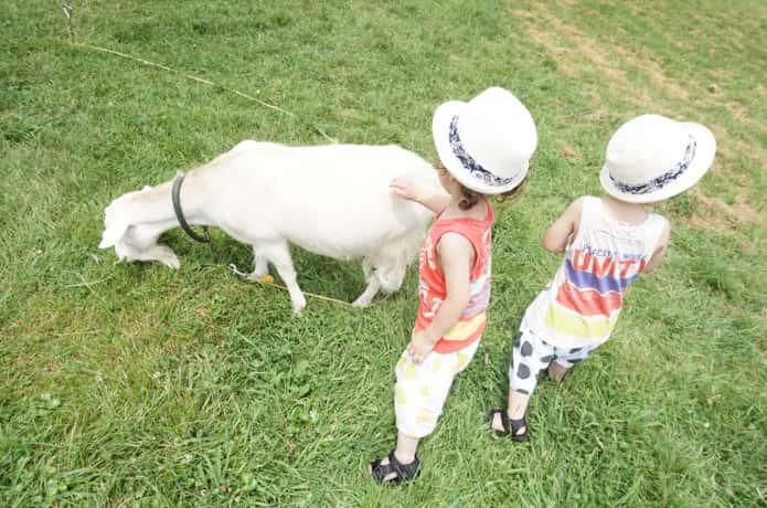 蔵王ハートランドでヤギに触る子供