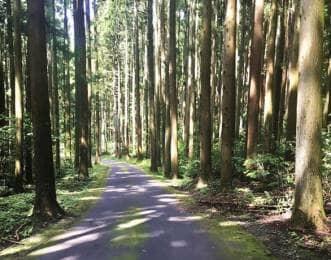 利府城跡 杉並木