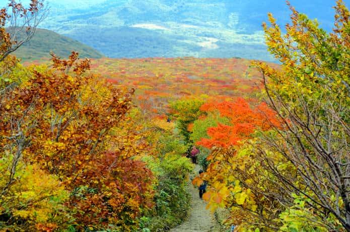 栗駒山 中央コース