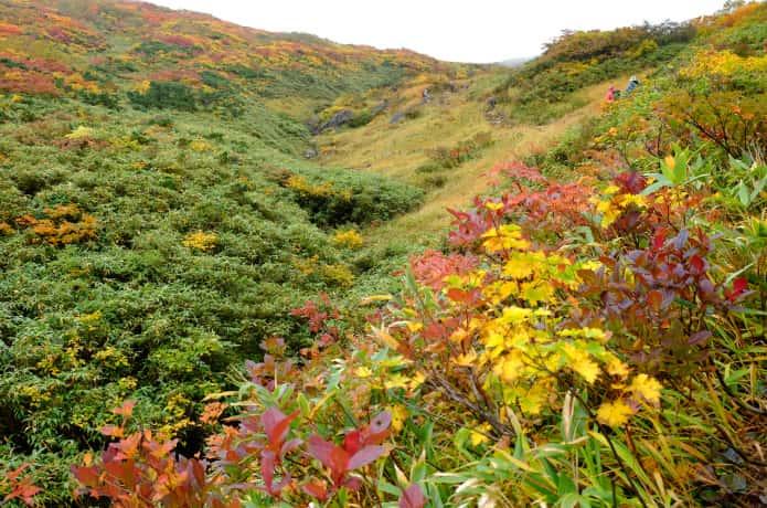 栗駒山 須川コースの紅葉