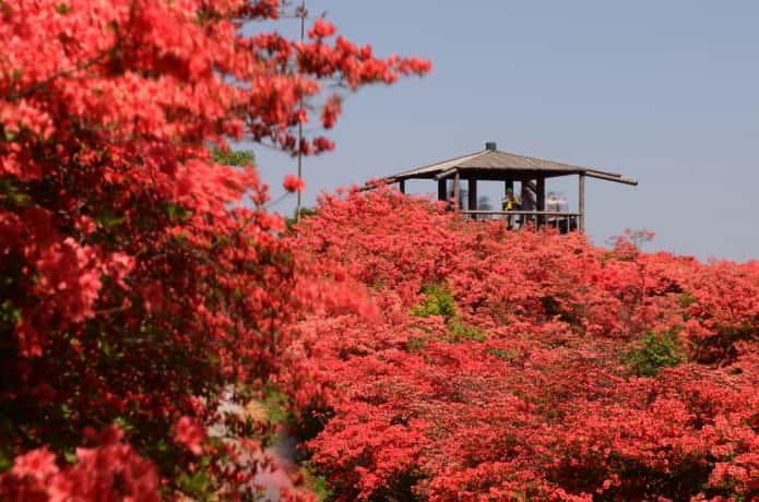 徳仙丈山 展望台