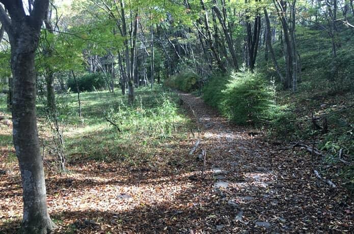自然観察の森 林道