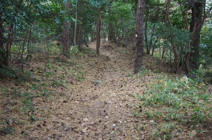 桂島 森の中