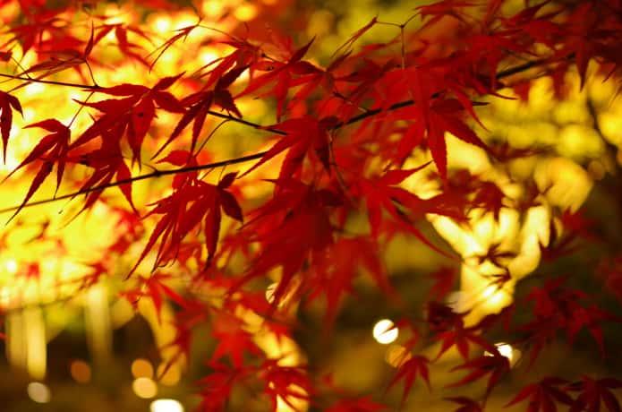 松島 紅葉 ライトアップ