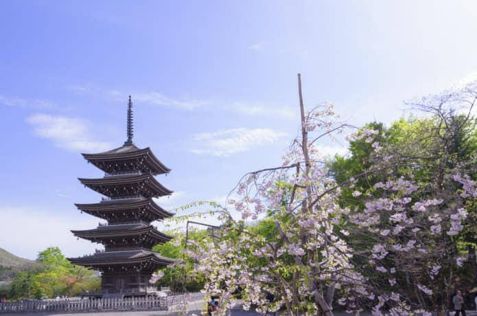 仙台 西方寺 桜