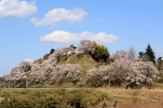 黒川郡大衡村 桜