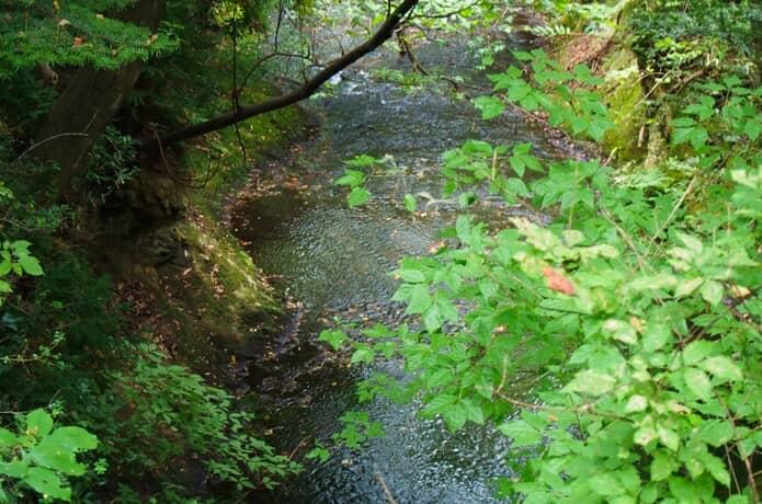 水の森公園 川