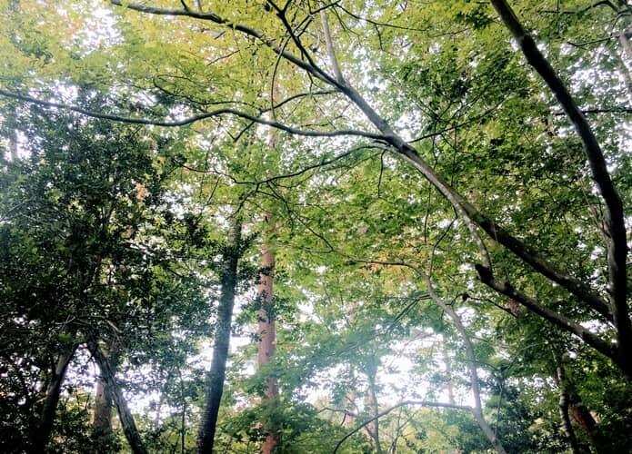 水の森公園 新緑